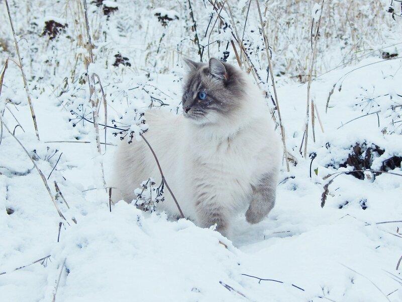 Снежная охотница