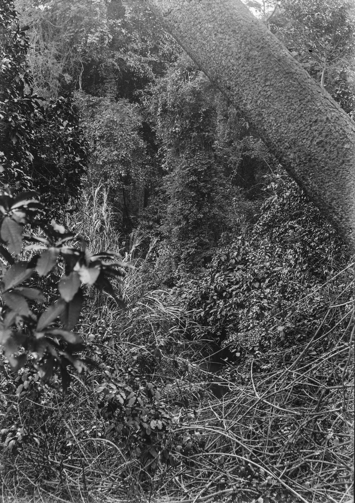 56. Леса в Момбобахе