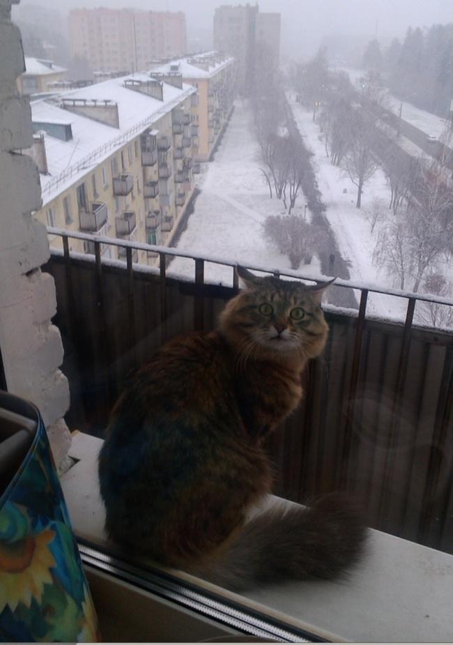 Прекрасная зимняя пора