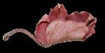 natali_14_fall_leaf16.png