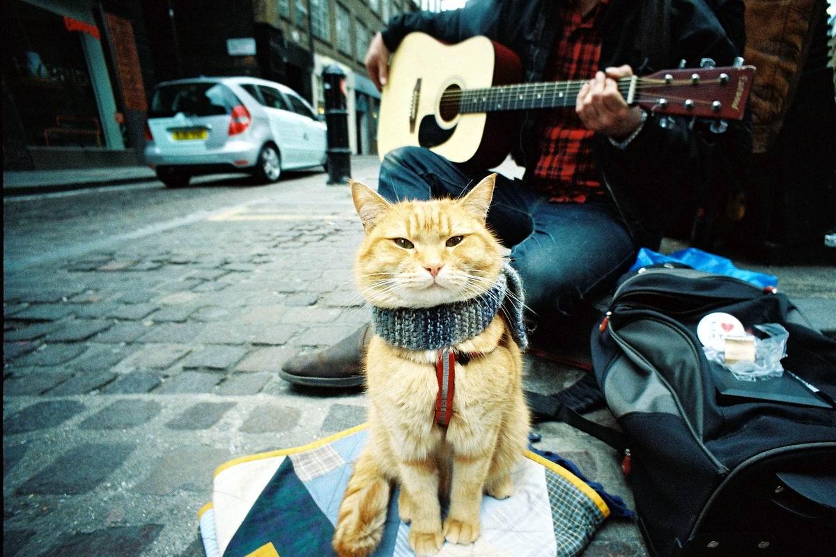 Я вам смурлычу под гитару: Лучший друг уличного музыканта