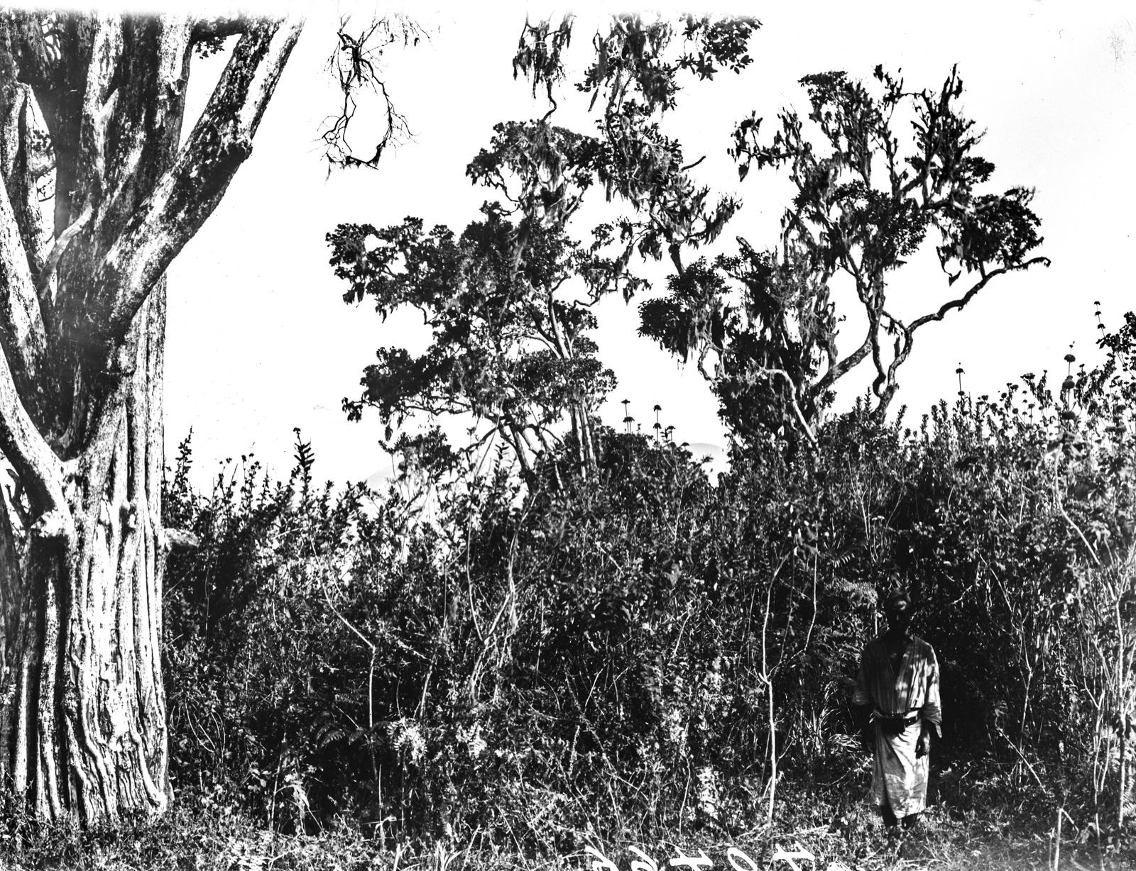 171. Растительность на западном склоне горы Меру
