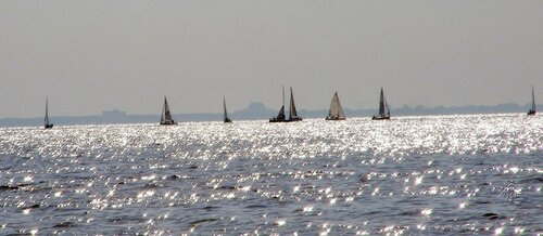 ЯХты, воды, птицы Финсуого залива
