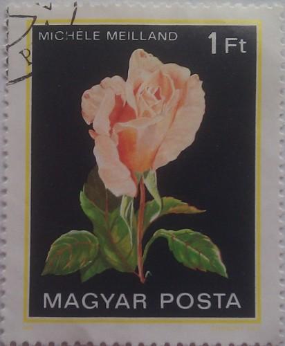 венгрия роза 1