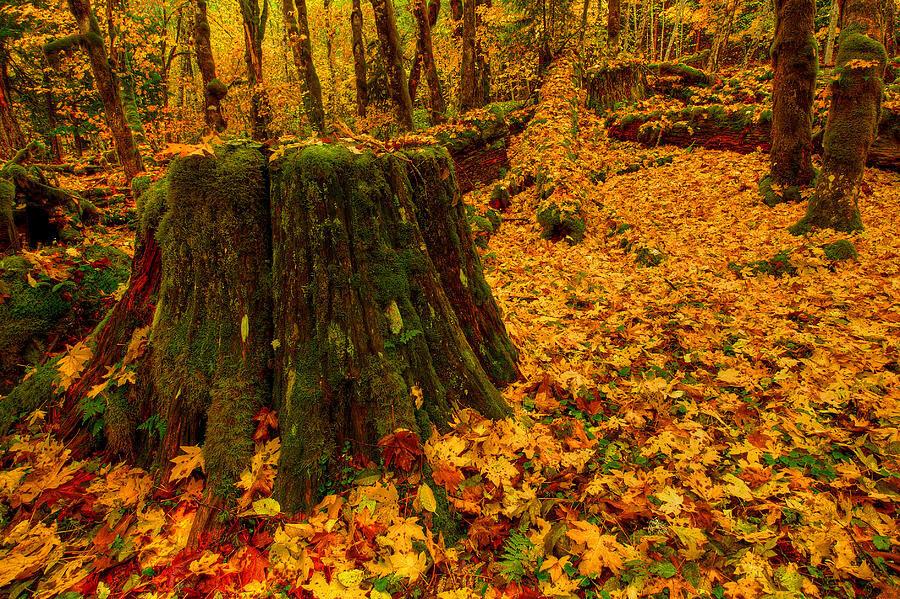 fall-leaves-mosaic-dan-mihai.jpg