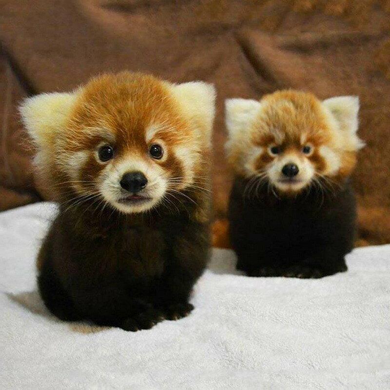 0 17a676 bff3c352 XL - Смешные фото маленьких животных от 19.11.2017