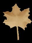 natali_14_fall_leaf11-sh.png