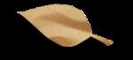 natali_14_fall_leaf14-sh.png