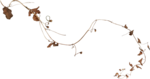 natali_14_fall_twig2.png