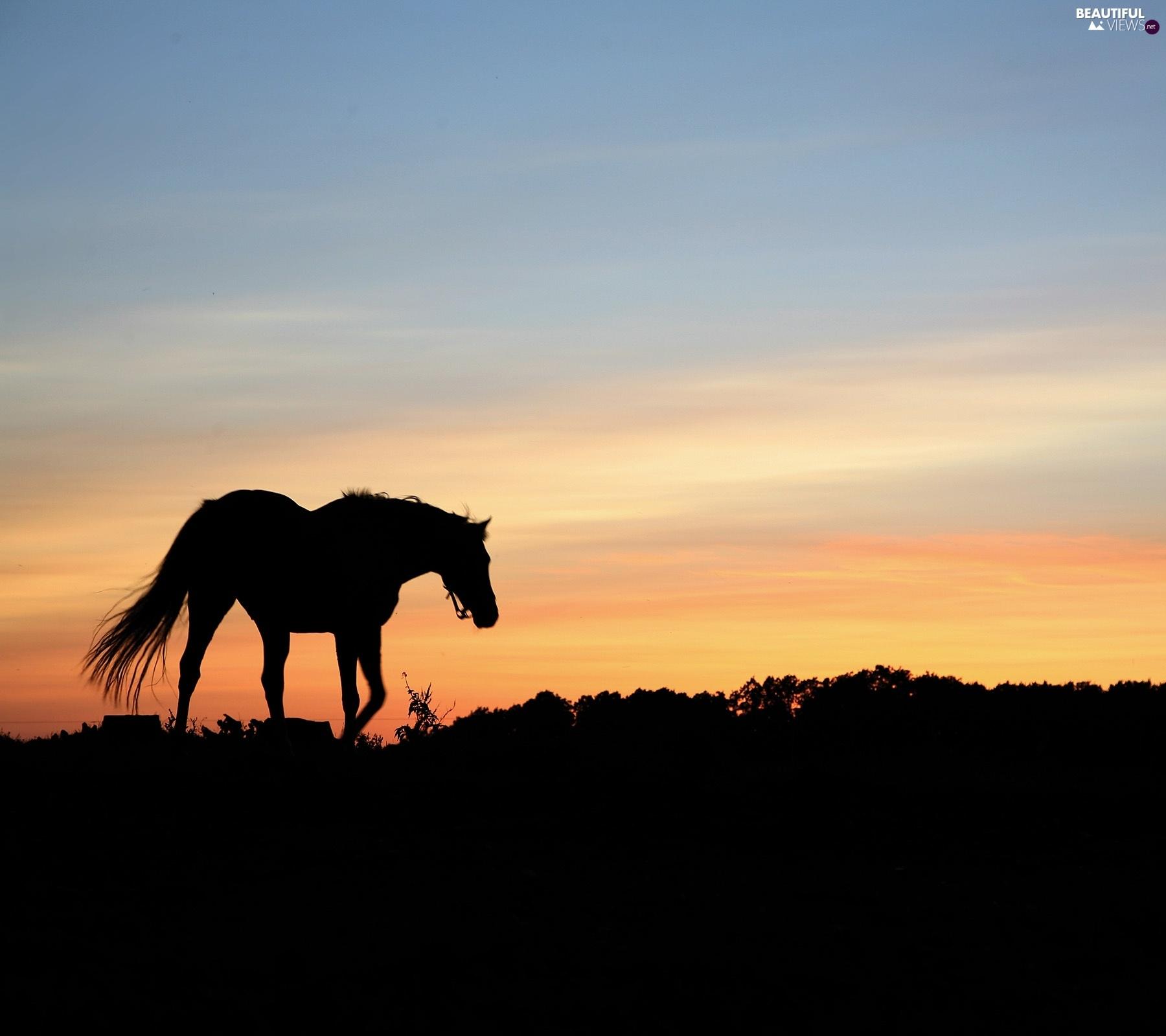 sun-west-horse-1.jpg