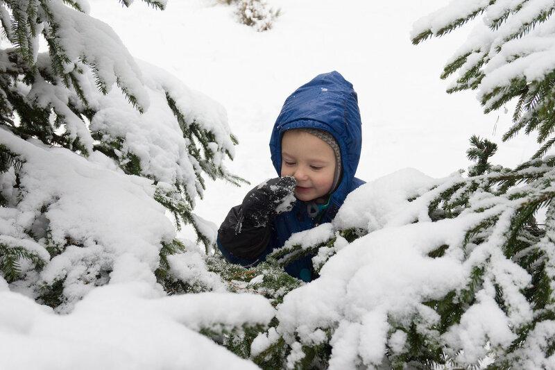ребенок ест снег в лесу