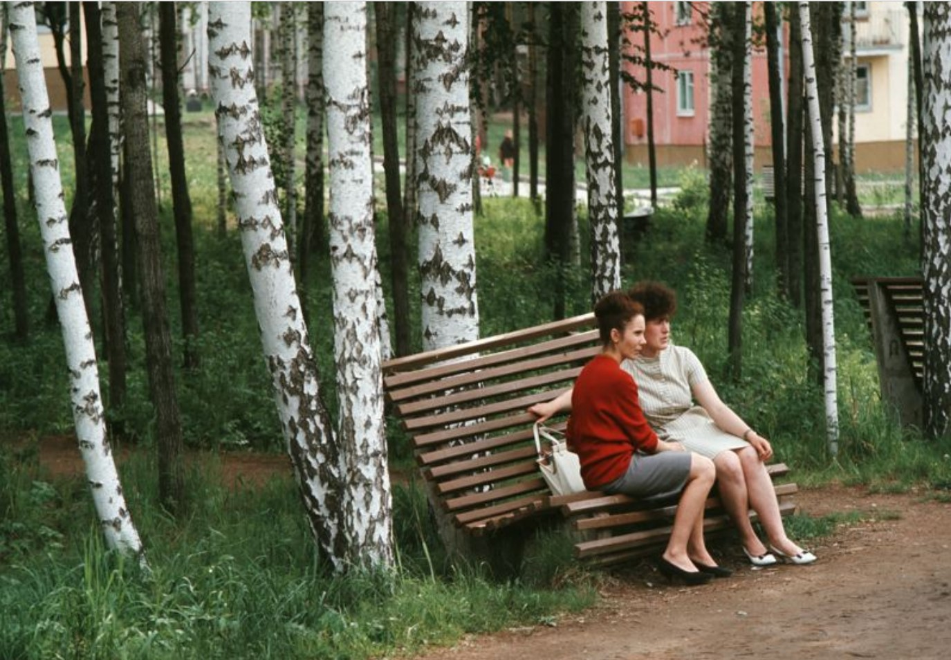 Две женщины сидят на скамейке в березовой роще