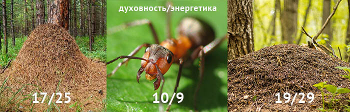 муравей_муравейник_700.jpg