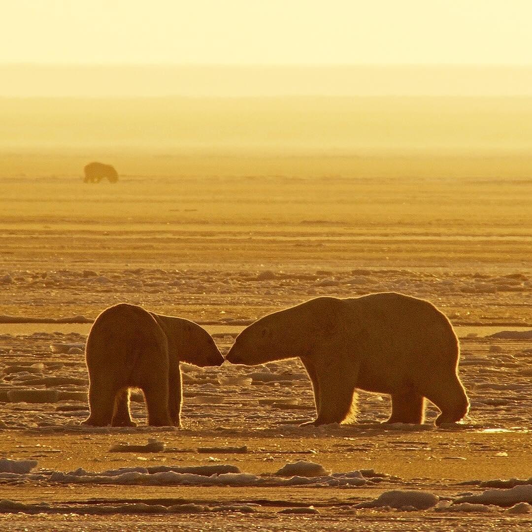 Дикие животные и природа на снимках Флориана Шульца