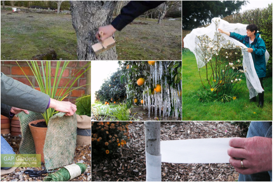 Защита сада и другие работы на даче