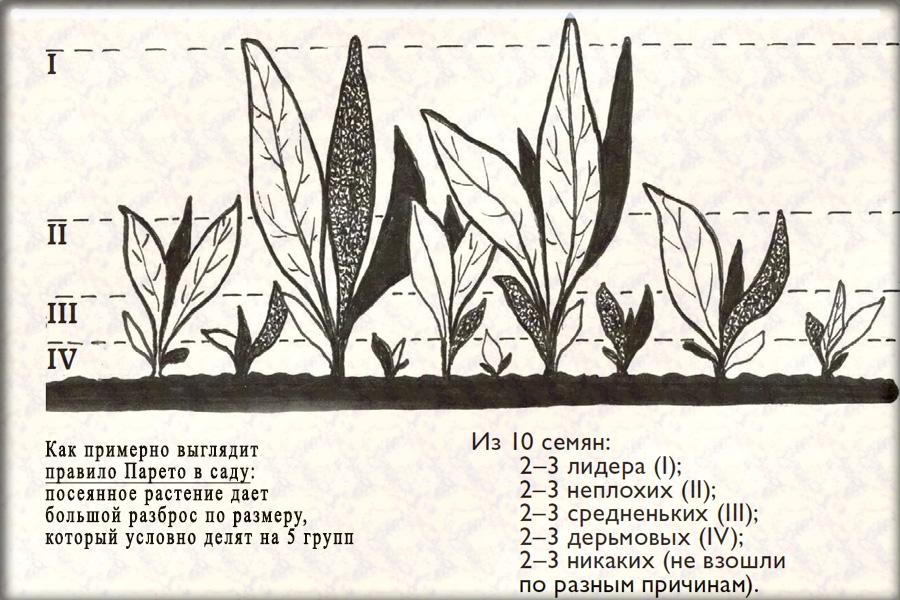 Принцип Парето в садоводстве