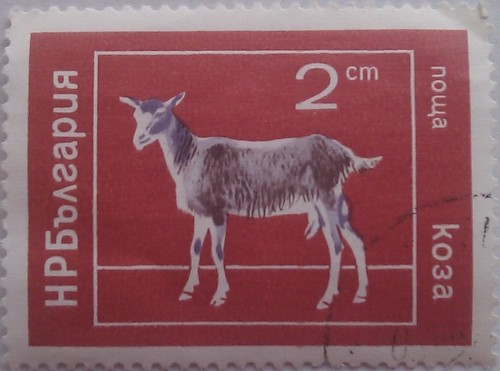 Болгария коза 2ст