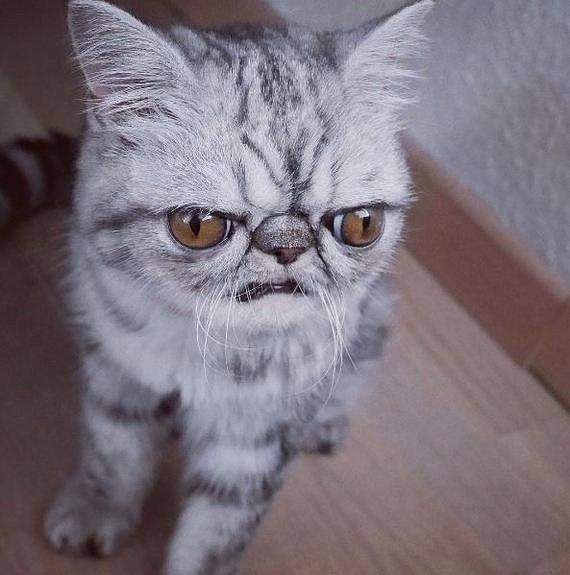 0 180a94 be681721 orig - Гермет - драматический кот