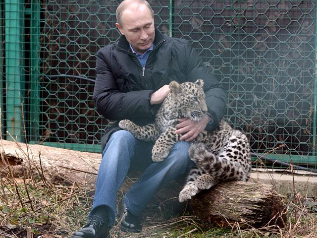 Программу восстановления популяции леопардов на Кавказе, запущенную в 2009 году, курировал лично пре