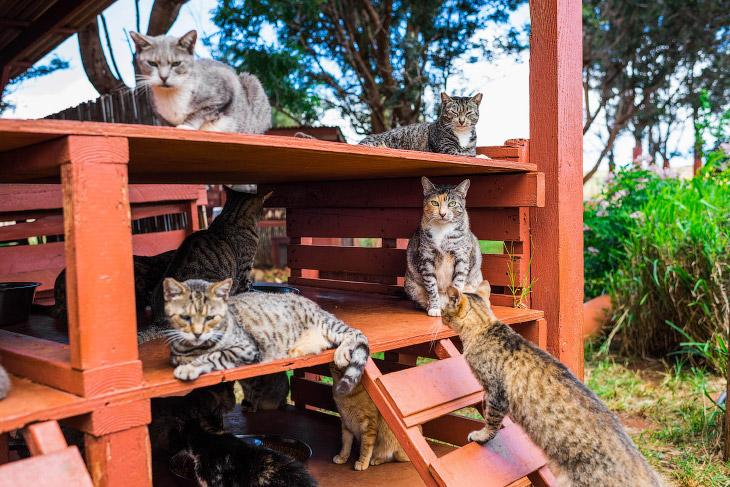 2. «Кошачий рай» был создан в 2009 году и сегодня здесь проживает около 500 хвостатых хищников.