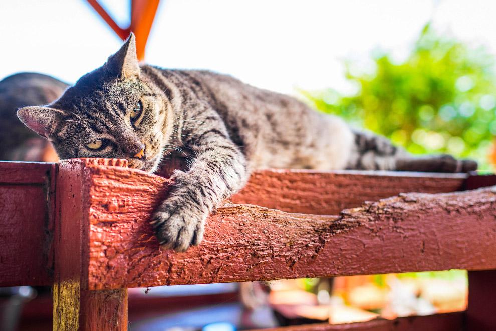 6. В общем, кошачий приют — это лучшее, что было придумано для решение проблем. (Фото Andrew Marttil