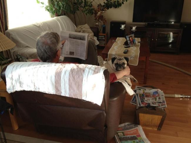 © ajaxwhat/reddit      6. «Мой папа никогда нехотел заводить вдоме кошек. Вытол