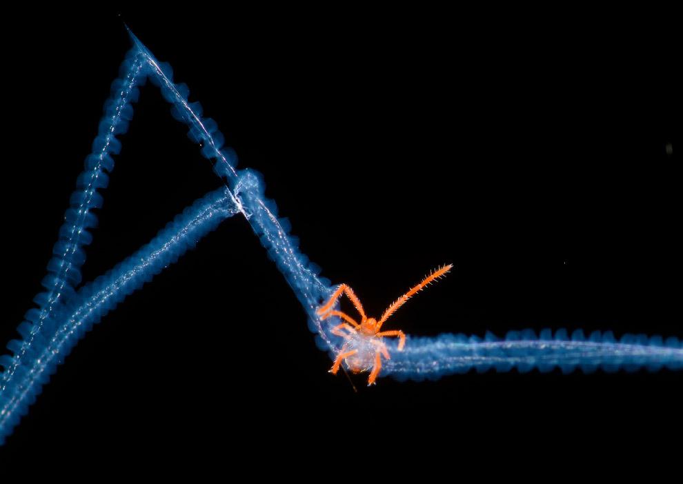 14. Победитель всего конкурса. Самолет и «сахарные» ледники Антарктического полуострова. (Фото Peter