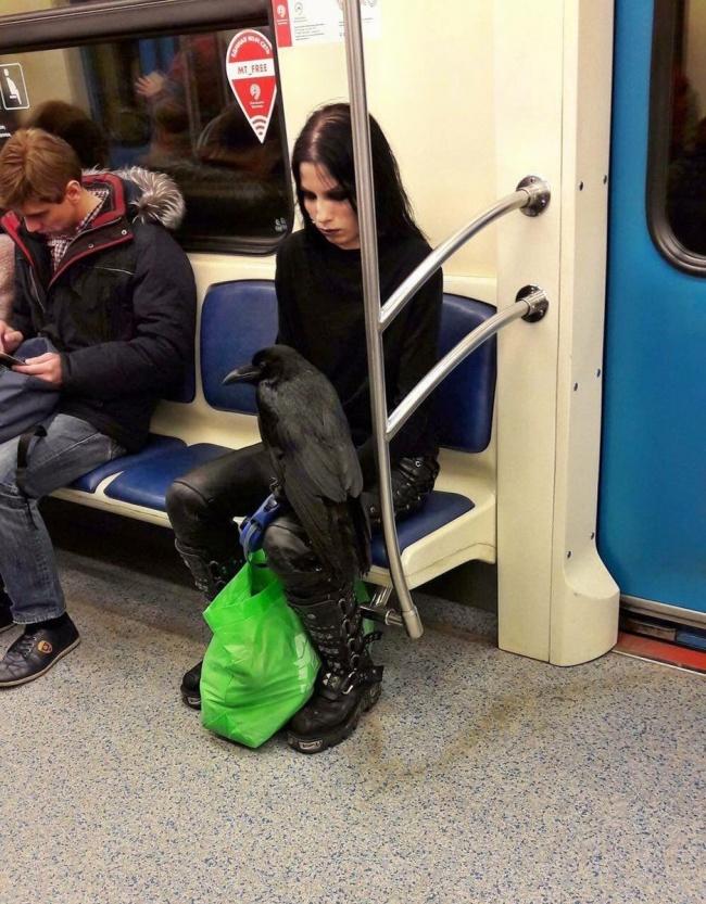 Веские причины полюбить поездки в общественном транспорте