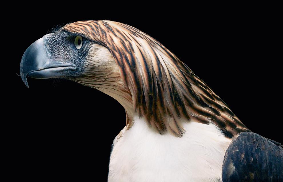 4. Сайгак. В 2002 году Международным союзом охраны природы (МСОП) этот вид был отнесён к категории «