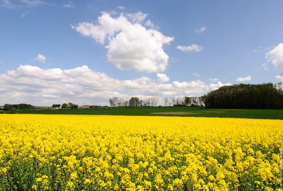 Ещё одно поле на самой окраине деревни: