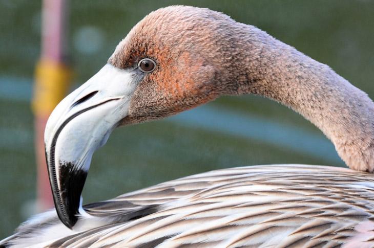 2. Птичьи разборки: цапля против отважного баклана. (Фото Christopher Schlaf):