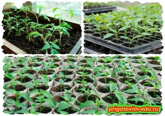 Секреты выращивании рассады овощей