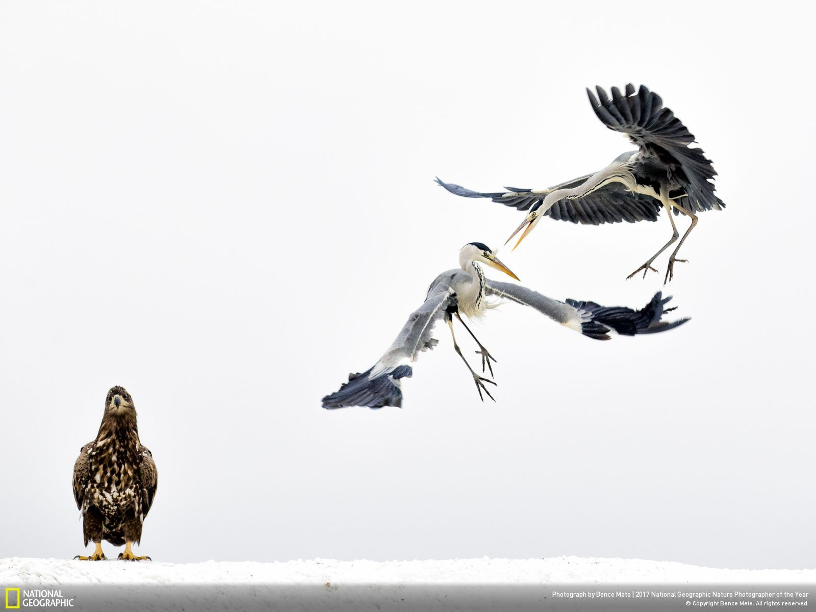 3rd Place, Wildlife. © Bence Mate