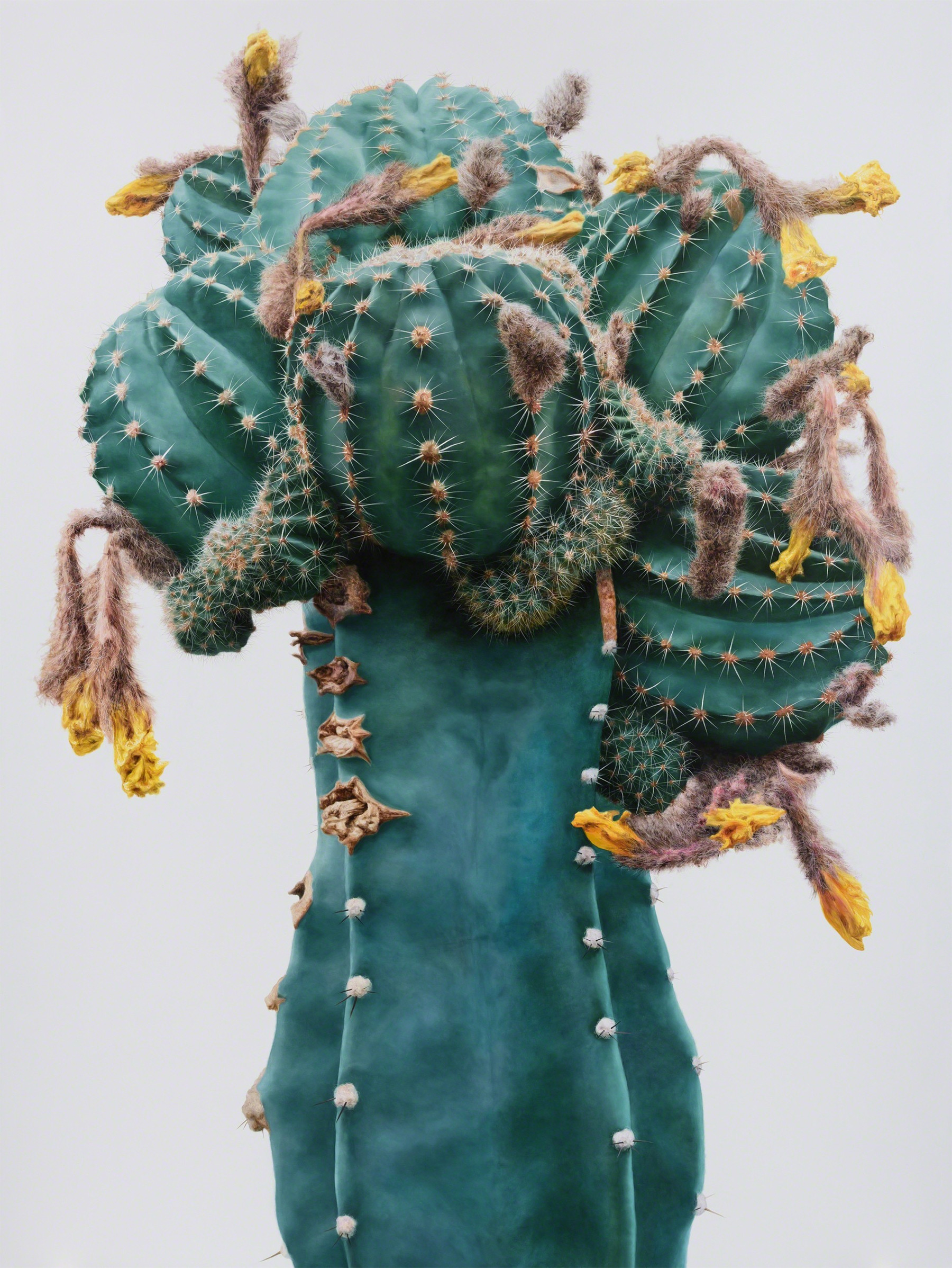 Cactus No. 93 , 2015. Oil on canvas. Courtesy Johyun Gallery.