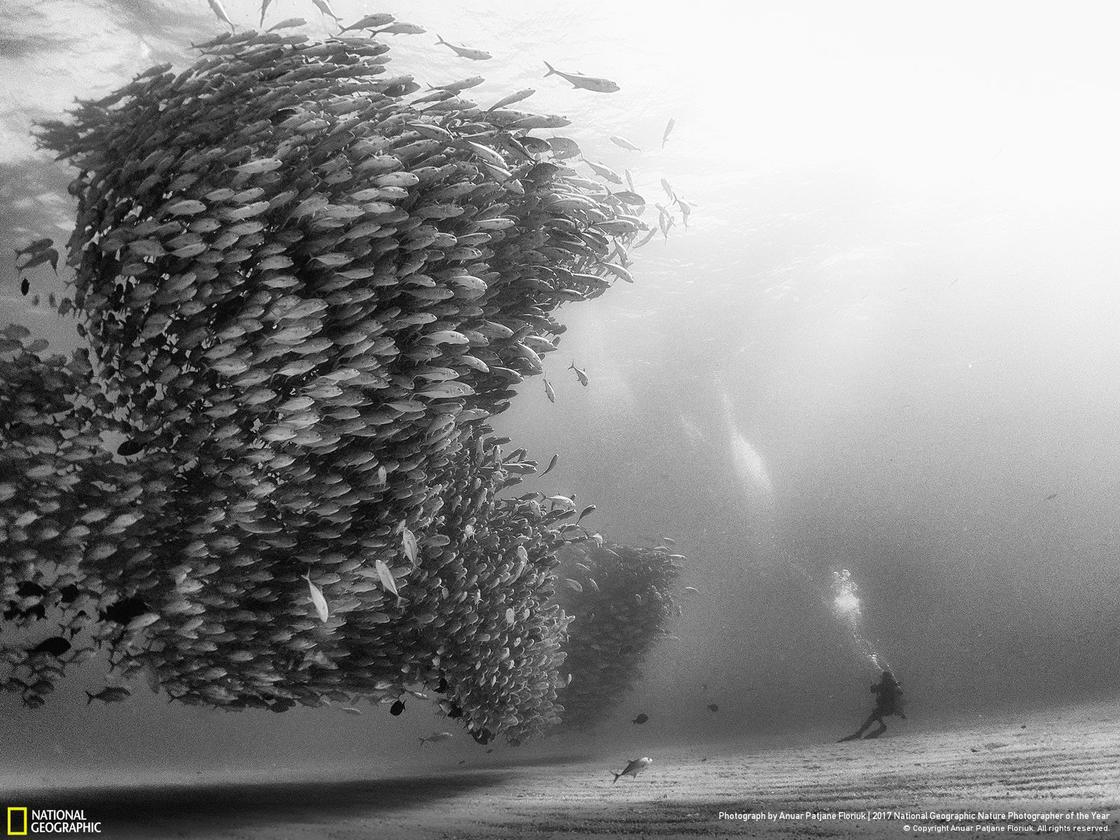 © ANUAR PATJANE FLORIUK