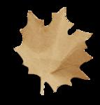 natali_14_fall_leaf13-sh.png