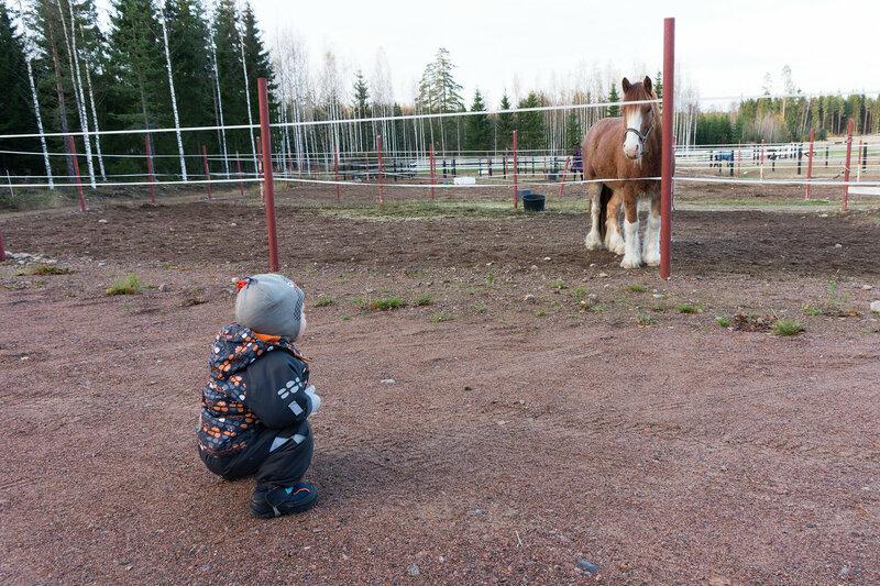 ребенок смотрит на лошадь