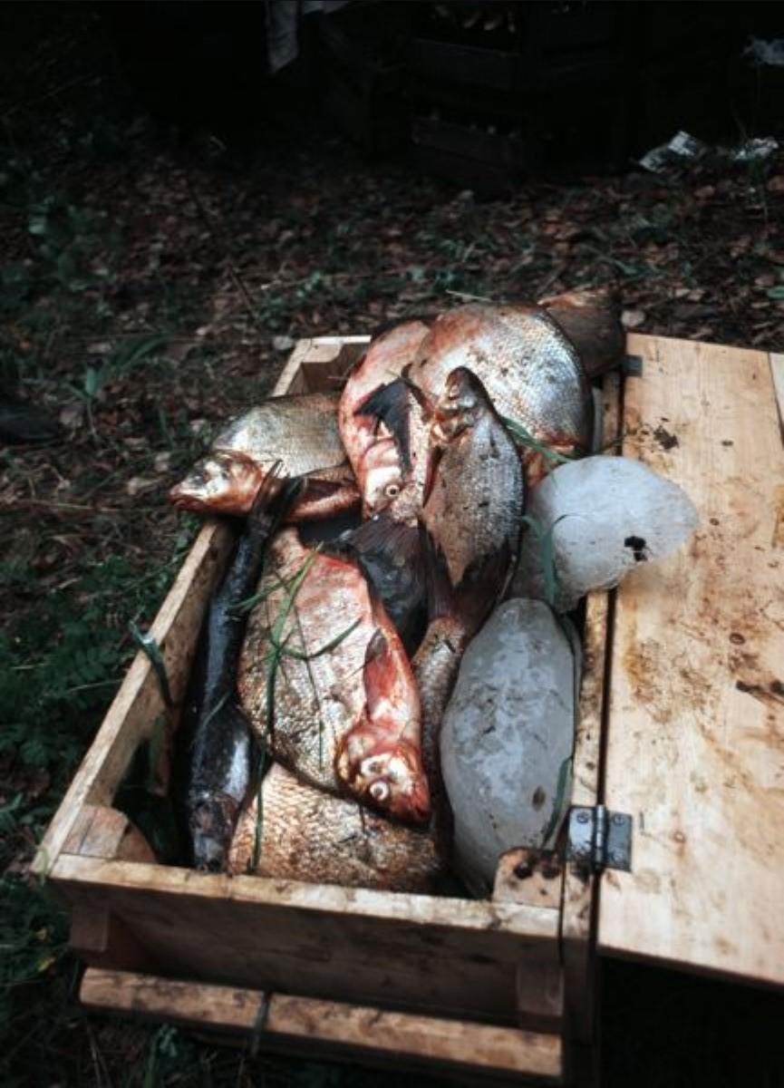 Свежепойманная рыба на льду в деревянной коробке