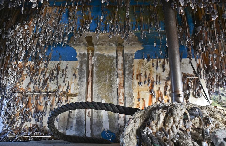 Цунами выбросило корабль-призрак на побережье США