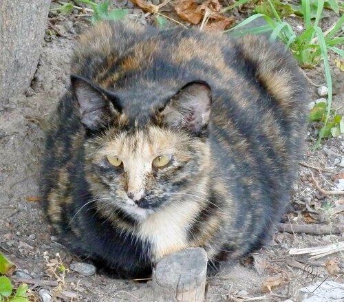 разные кошки такие
