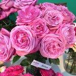 Alexandra _Farms_roza (2).jpg