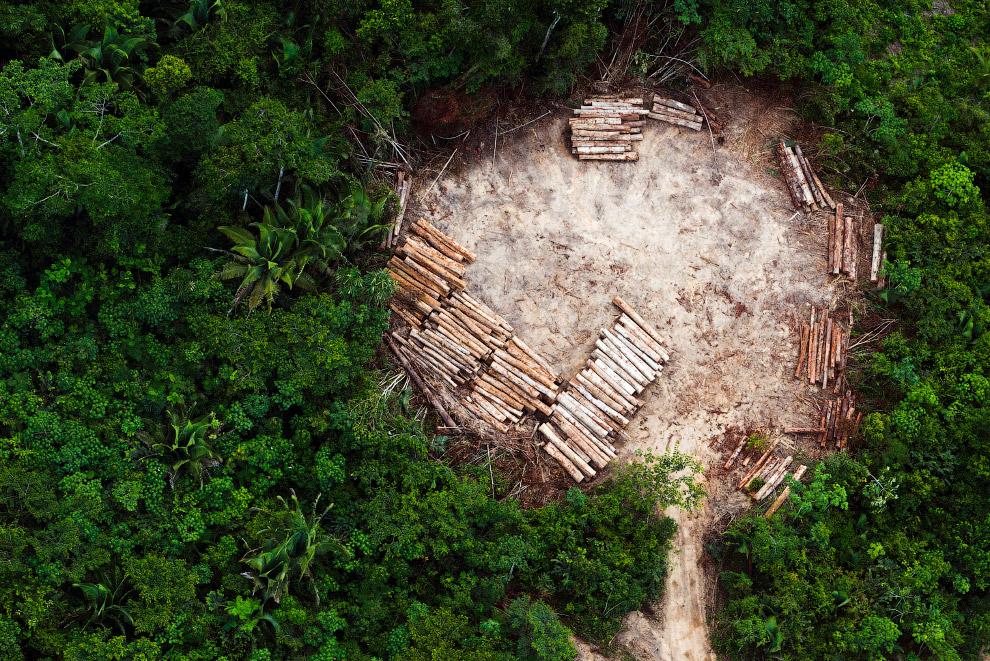4. Это тлеющие останки тропического леса Амазонии. Основной причиной обезлесения Амазонии является р
