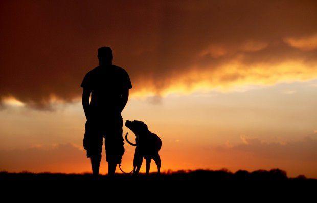 Притча о путнике и собаке (1 фото)