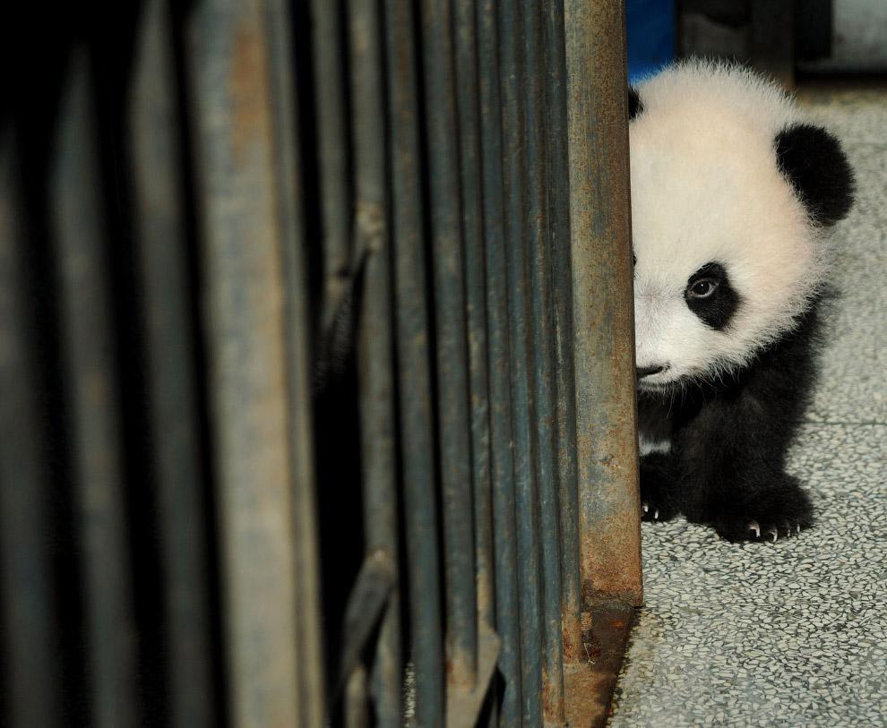 17. Хорошо устроился. (Фото China Daily | Reuters):