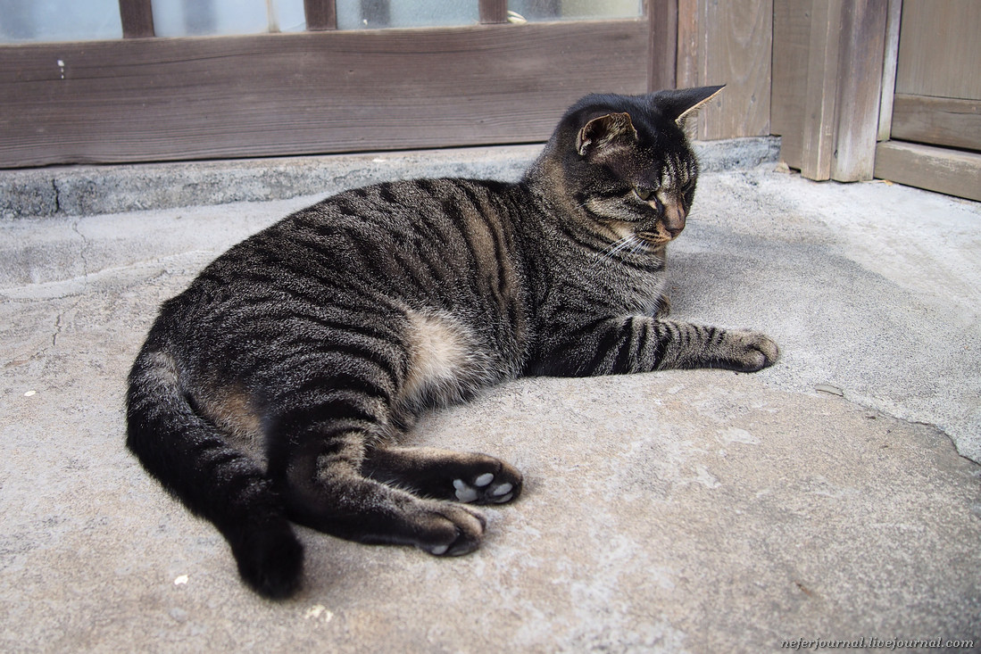 Японская кошка Анко. Воспитанная, в дом не лезет. Даже если дверь открыта, сидит снаружи.   В з