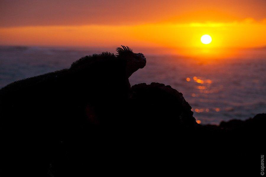 Особенно эффектно эти зверюги выглядят на фоне заката.