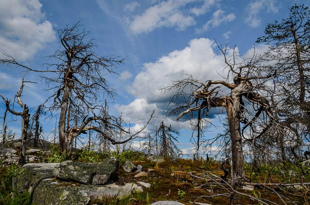 С момента открытия (более 30 лет назад) С.М. Симоняном гора успела обрасти всяческими легендами, в б