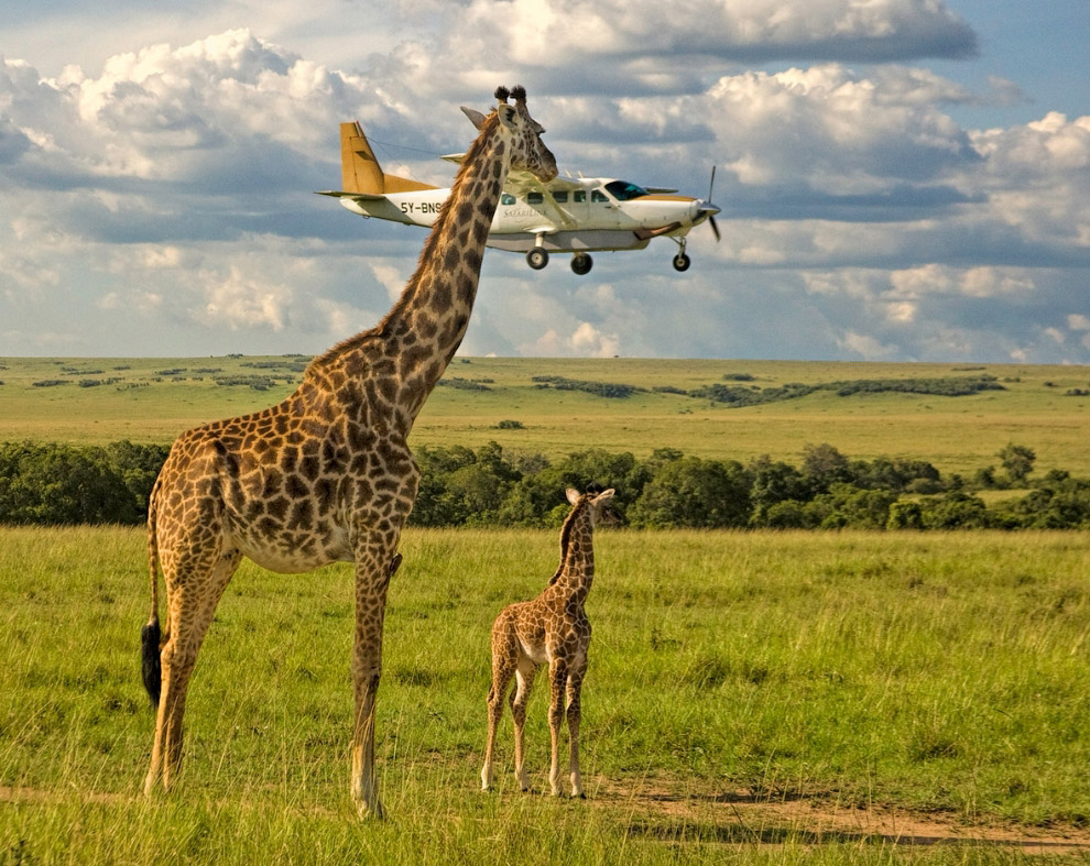 11. Чаще улыбайтесь. (Фото Eugene Kitsios | The Comedy Wildlife Photography Awards):