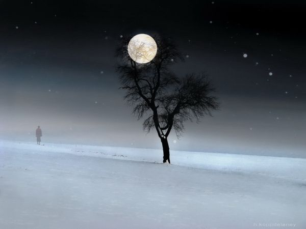 first-day-winter-full-moon-snow-tree-walk.jpg