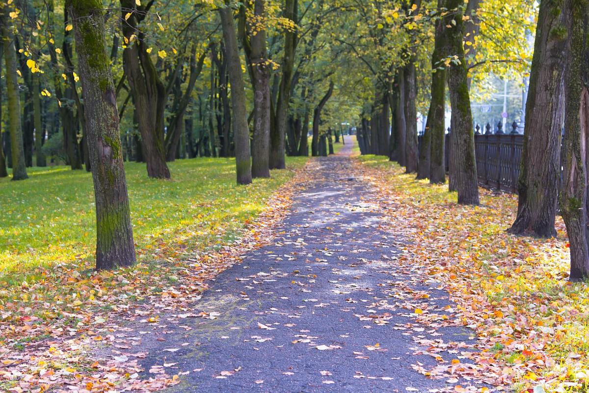 Пионерский парк в Минске